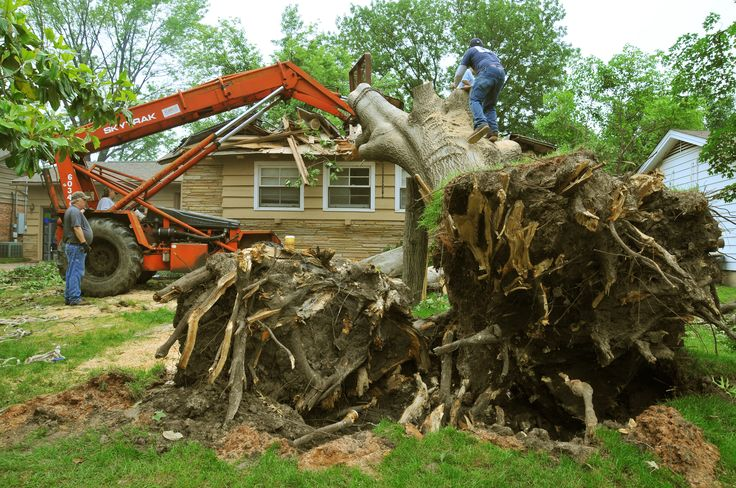 Some difficulties that may lead to property damage is when the tree has become unstable or is swaying a lot when the wind blows.  Read more: https://talltimberstreeservices.com.au/tree-removal/emergency-tree-service/