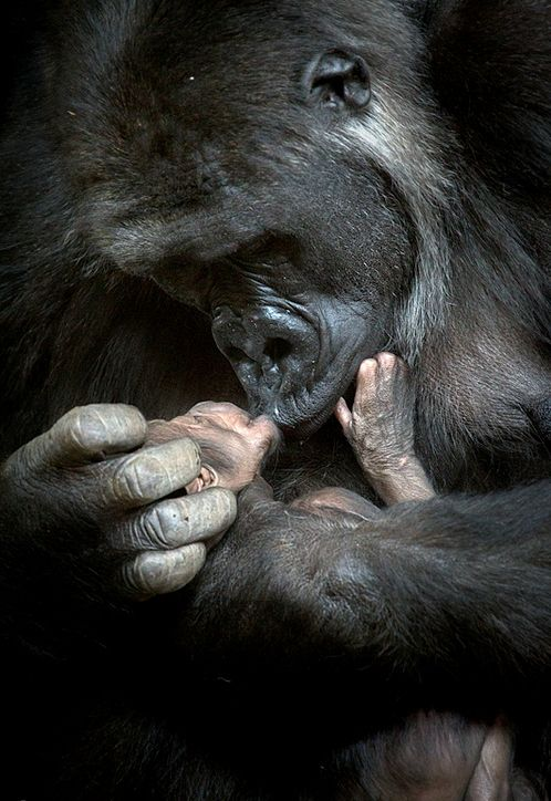 Take good care of each other. What a beautiful mama and baby