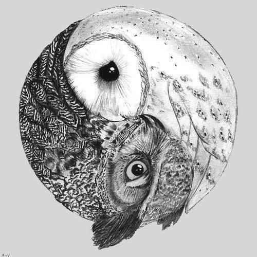Yin and Yang. For owls, that is the perfect analogy!