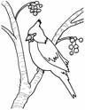 Burgess Bird Book Coloring Pages