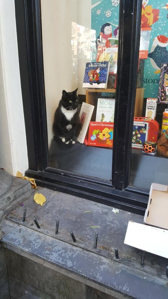 The Amsterdam Waterstones bookshop has a cat. Click here to see more cats of Amsterdam http://www.traveling-cats.com/search/label/Amsterdam