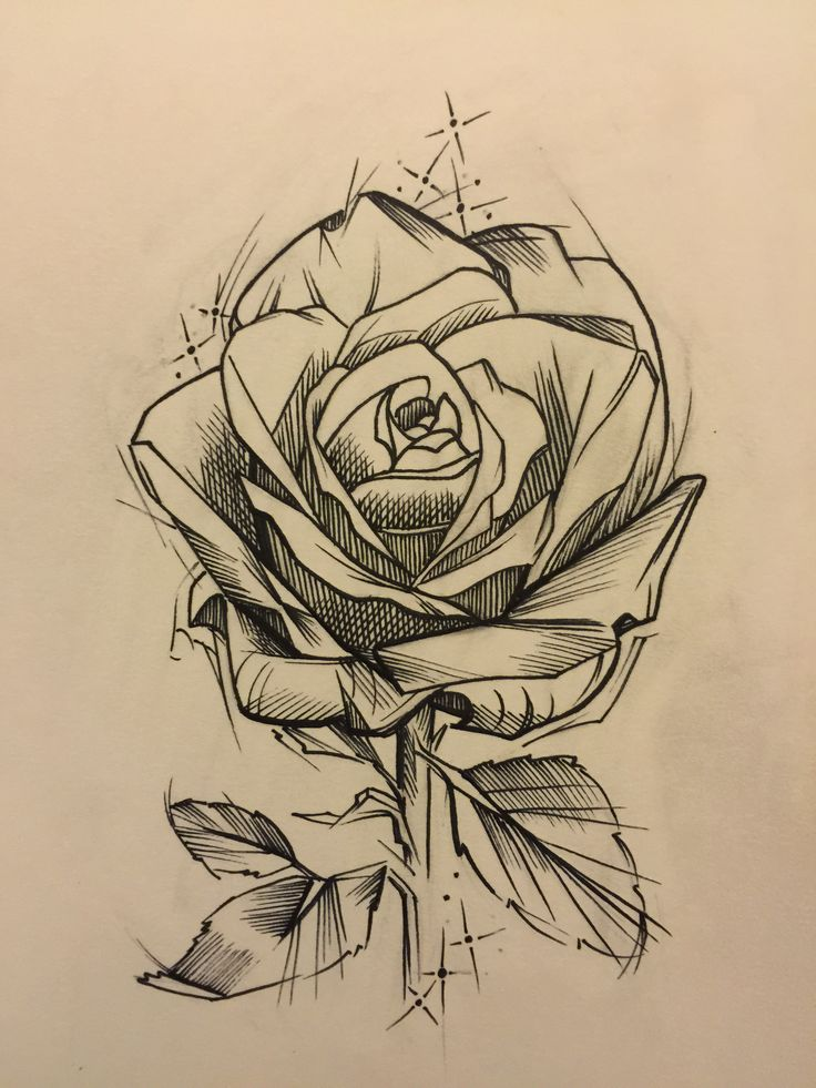 чабера стелятся, тату в стиле скетч розы фото начинают