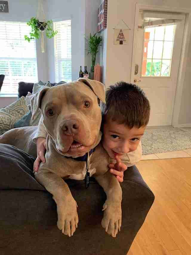Pin On Pit Bull
