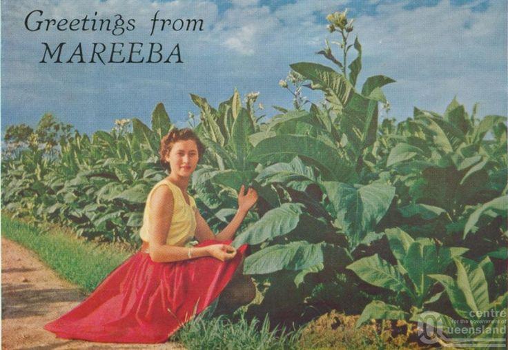 mareeba history - Google Search