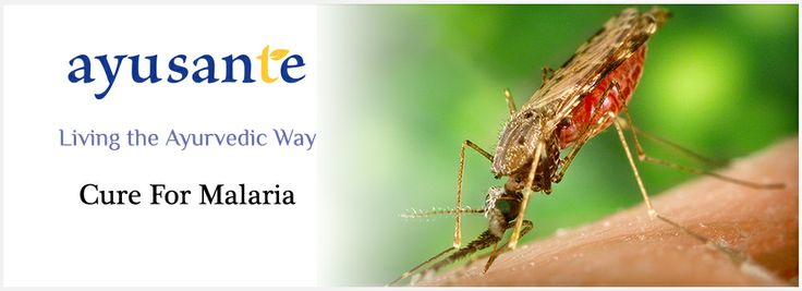 Cure for Malaria Malaria is a life-threatening mosquito-borne infectious disease caused by parasitic microorganisms. What is Ayurveda's cure for malaria? Taking lemon juice with water is one of the easiest remedies for malaria. Black pepper powder and cinnamon powder with honey and water helps in lowering the temperature. Neem and tulsi (Holy Basil) help in prevention of malaria. It is better to maintain our environment and our health to prevent malaria. Ayusante Life - Living the Ayurvedic…