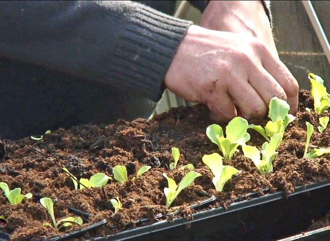 La nature se réveille. Hubert le jardinier vous explique en images les travaux à faire au jardin en mars.