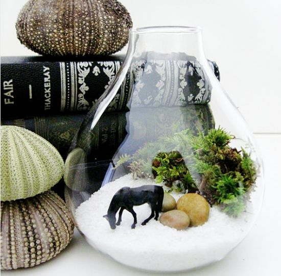 Using Plants in Your Home Part 4 :: Terrariums | Projects ...