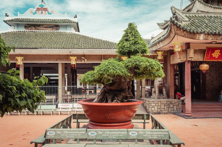 The big tree - I thought that bonsai is exceptionally tall.
