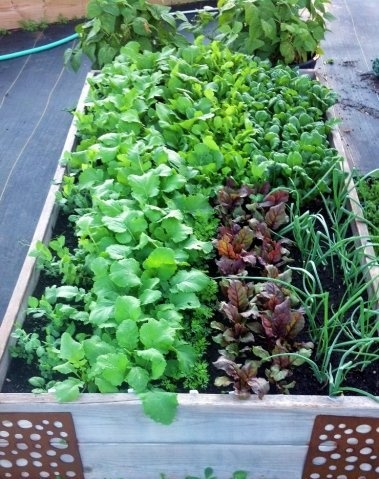 If you grow your vegetables in a raised bed, you can grow more food with less work.