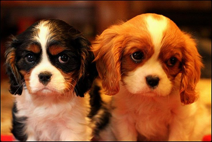the cutest puppies!!