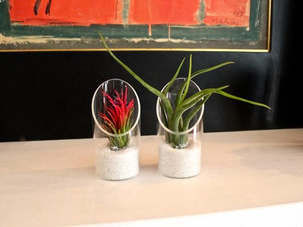 air plant tilly kit combo - Kopfteil Plant Knig