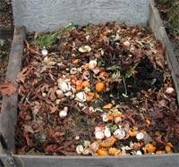 Volgens mijn buurvrouw mogen schillen van citrusvruchten niet op de composthoop, evenmin als aardappelschillen. Deze tuinvereniging zegt weer anders! Ik zal er nog meer artikelen op naslaan maar deze sprak me toch wel aan omdat het compleet is.  http://www.volkstuinverenigingonsgenoegen.nl/Compost.html