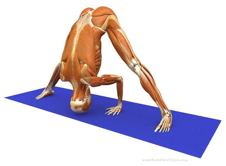 Los granos sobre la espalda y sobre los hombros de la causa el tratamiento