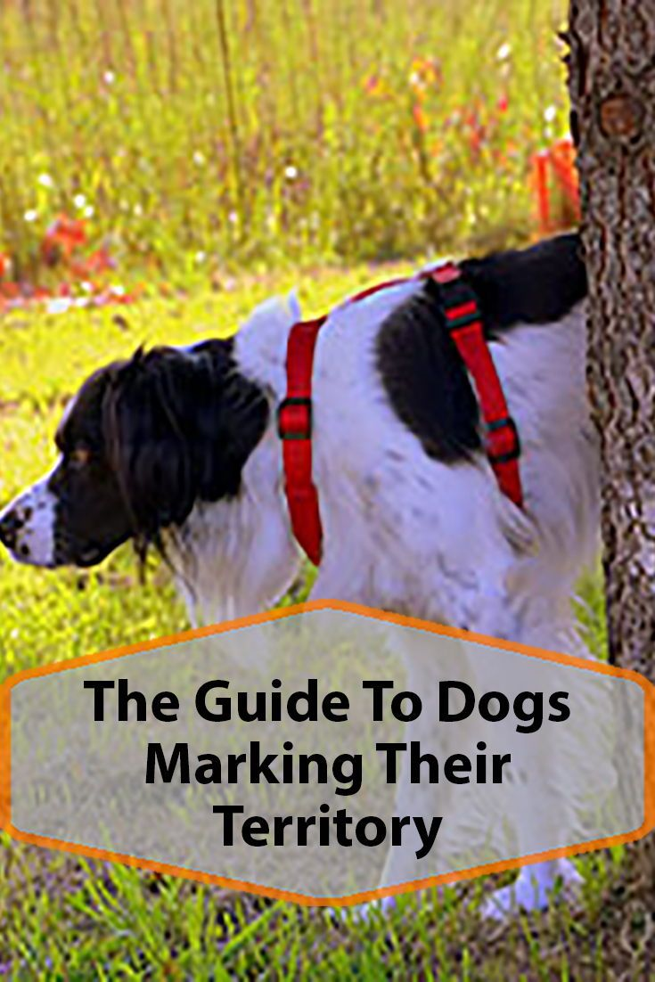 Why Do Dogs Mark Territory Dogs Dog Lovers Dog Behavior