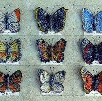 'Small Butterfly Collection IV', 20cm x 28.5cm