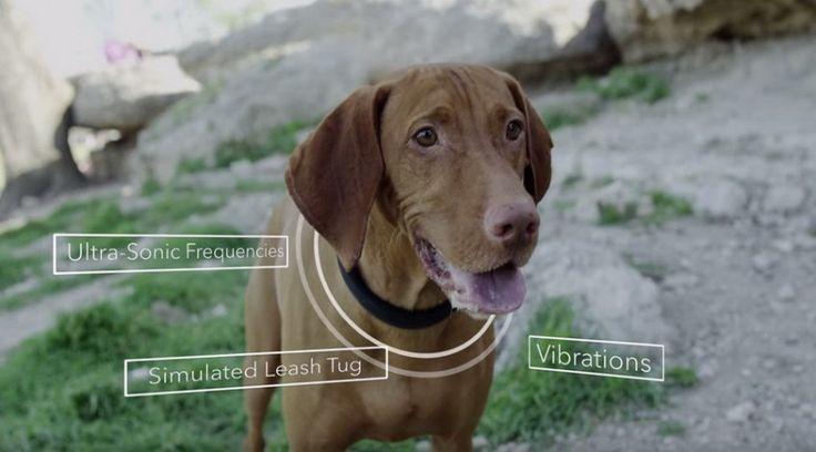 5 gadget για το σκύλο! [Video]