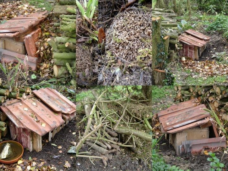 Les abris h rissons bricolage pinterest pindsvin - Truffaut abri de jardin ...