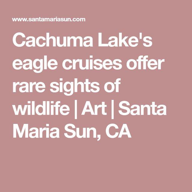Cachuma Lake's eagle cruises offer rare sights of wildlife   Art   Santa Maria Sun, CA