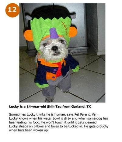 100 best pet costumes images on pinterest funny animals ha ha and costume 83 homemade solutioingenieria Image collections