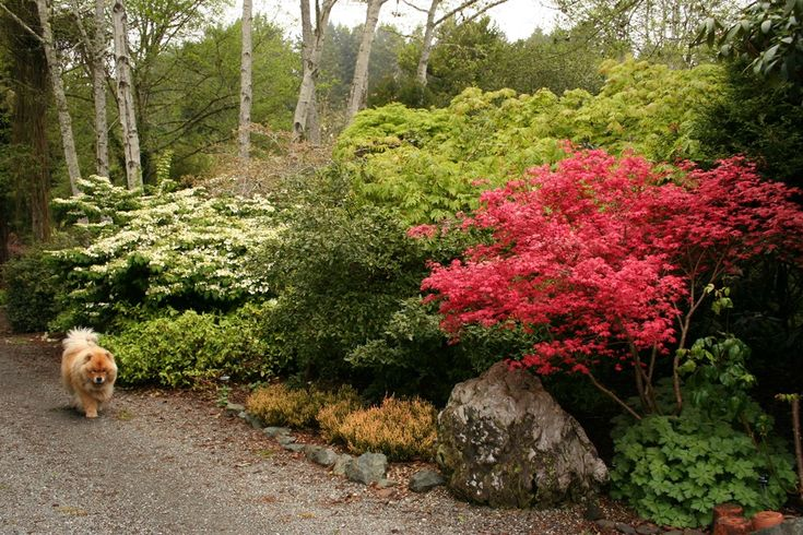 13 best shrub borders images on pinterest landscaping landscaping ideas and backyard ideas - Mixed style gardens ...