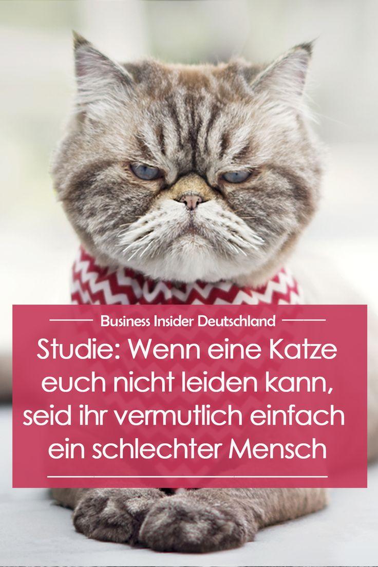 Studie: Wenn eine Katze euch nicht leiden kann, seid ihr vermutlich einfach ein schlechter Mensch