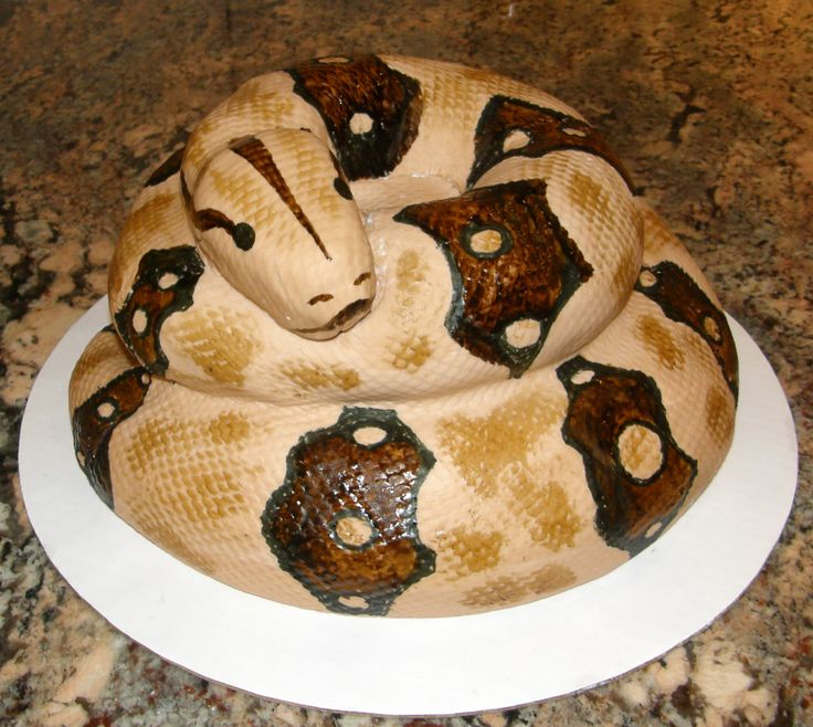 Boa Constrictor Cake Snakes Pinterest Boa