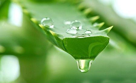Aloe Vera - Symbol für Gesundheit und Schönheit -> https://www.zentrum-der-gesundheit.de/aloe-vera-ia.html #gesundheit #aloevera #heilpflanzen #haut #naturheilkunde