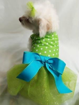 Bu elbiseler bu ara çok moda! #hayvangiysileri #hayvanlar #kedi #köpek #cat #dog