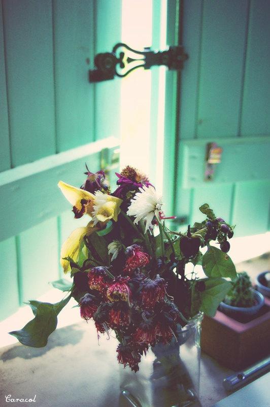 Photography  Flowers par Caracolesque sur Etsy, $20,00
