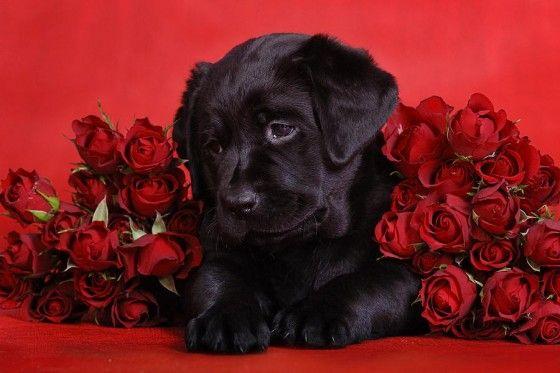 cool Fotos de rosas rojas #imagenesdeamor