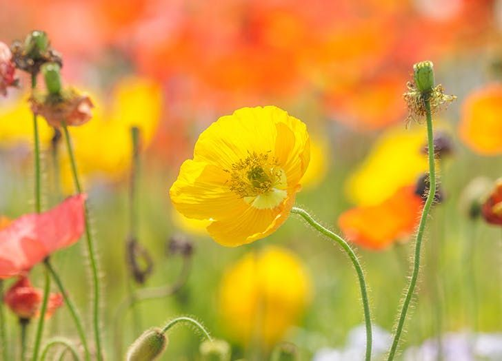 10 Gorgeous Perennials to Plant This Fall  via @PureWow
