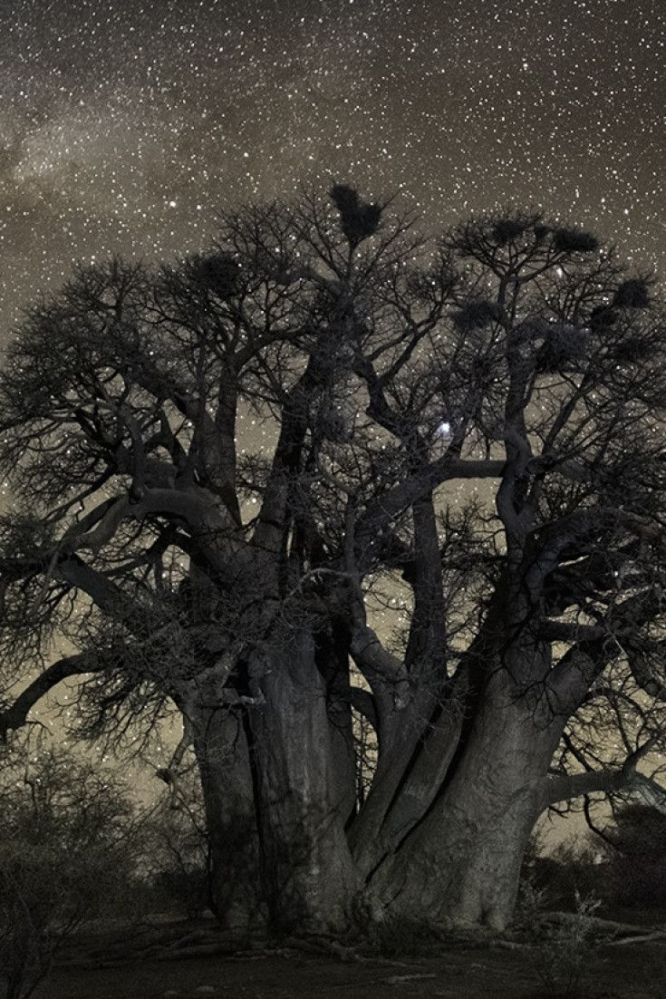 Beth Moon's Majestic Photographs Of Ancient Trees Will Make You Feel Very, Very…