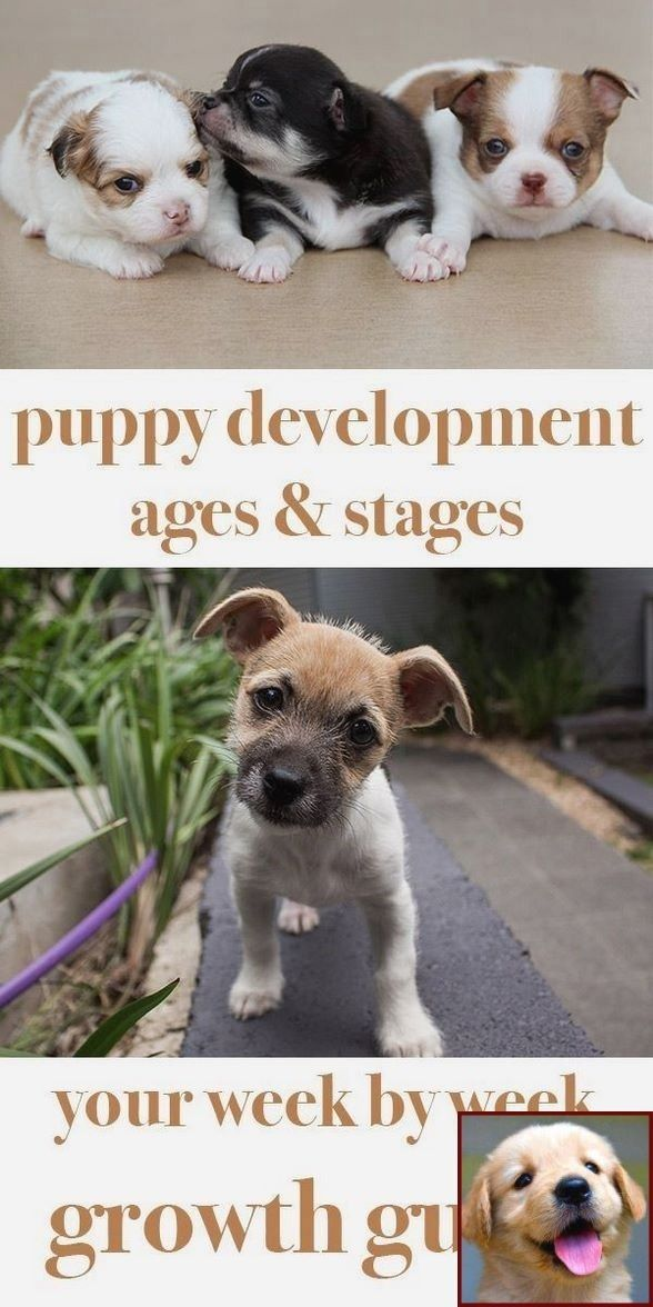 Dog Behavior Lowered Head And Dog Training Courses In Bangalore