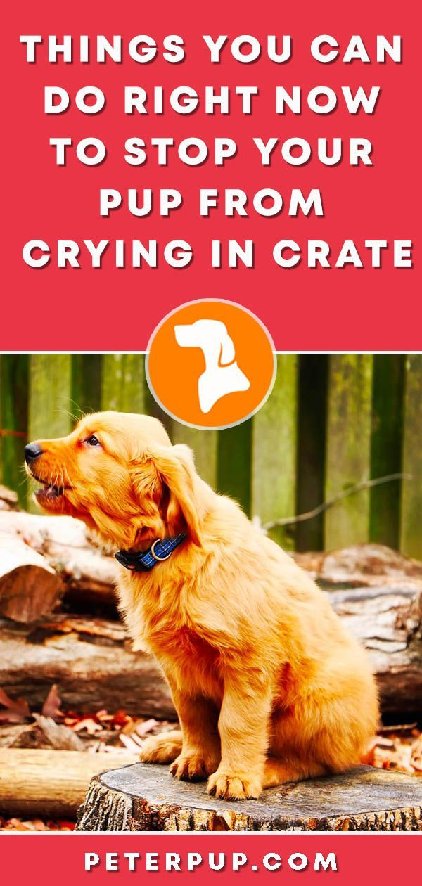 How To Stop Puppy Crying In Crate At Night