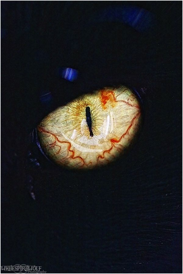 Best Animal Eyes Images On Pinterest Nature Macro - 24 detailed close ups of animal eyes