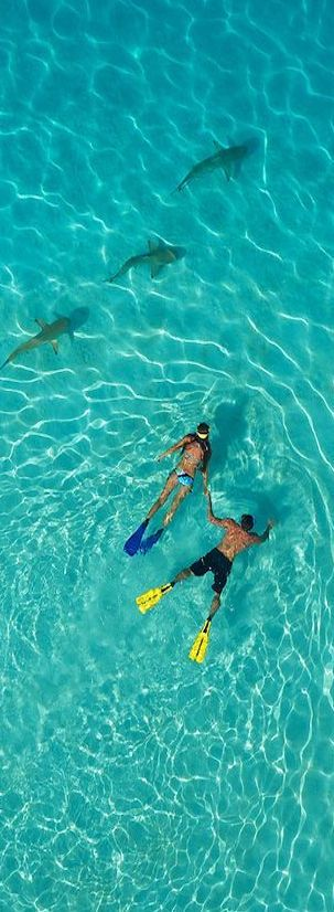 Snorkeling Picture -- Shark Photo -- National Geographic Photo of the Day