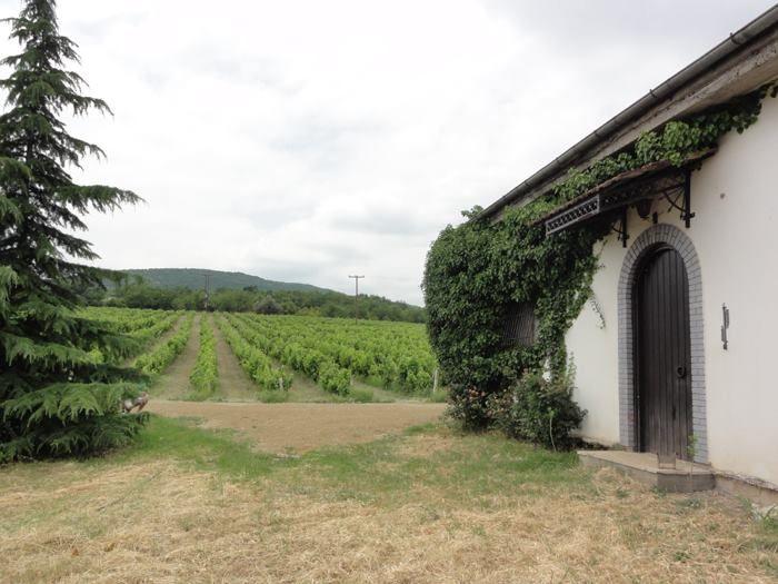 "Markovitis Winery ""Pegasus"", Polla Nera   Naoussa"