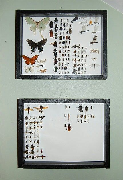 DIY Insect Display Case