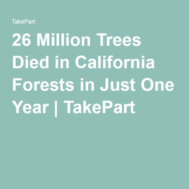 26 Million Trees Died in California Forests in Just One Year | TakePart