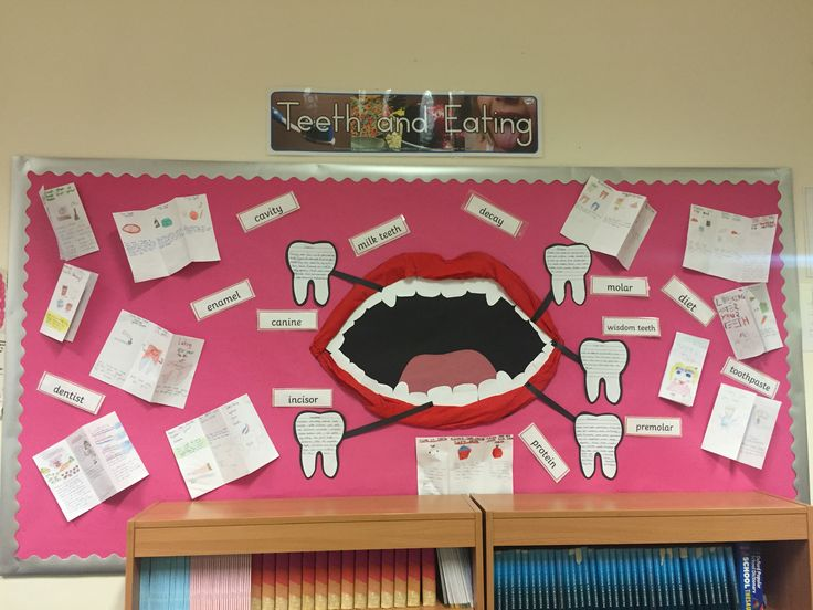Animals including humans- teeth and eating ks2 Science