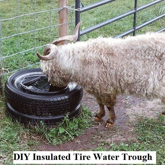A really neat idea for keeping your smaller livestock and larger pets water from freezing this winter! Susan's husband built the trough pictured above for their goat. But it would work for big dogs, smaller horses, etc..