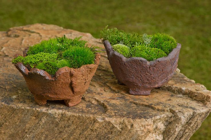 Moss container garden.  I love these clay pots!!!