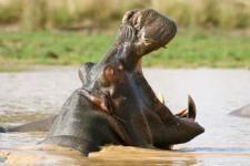 Wildlife Benin Fair-2