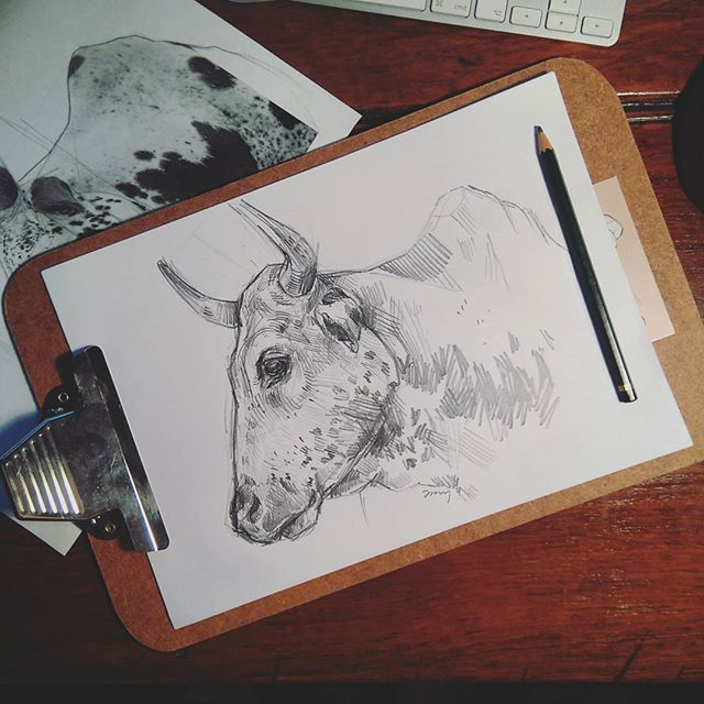 Most definitely in my happy space right now drawing, and drawing cows at that <3 doing some practice sketching in a 5B before attempting my A3 ink painting of this big guy. #drawing #passion #sketch #cow #nguni #illustration #pencil #5B #practice #bull #art