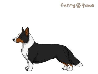 Furry Paws // WCH Kip's Ucanmakeit [Lla 3STM 19HH 1.547] 7.2 *BoB*'s Kennel