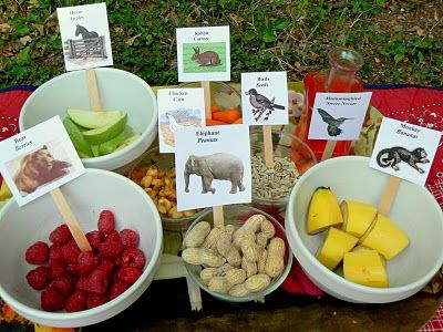 15 best Zoo Birthday Party Ideas images on Pinterest Birthdays