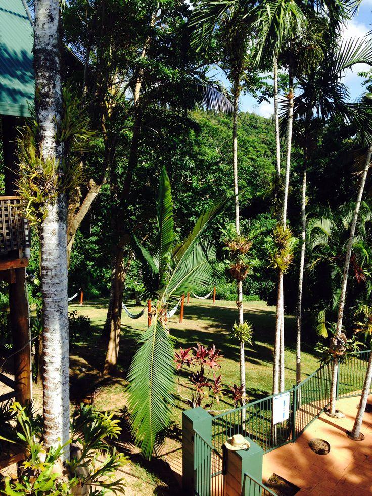 Jackaroo hostel in the rainforest- Peaceful & amazing #Queensland #MissionBeach #Oz