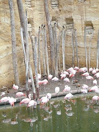 Pink paradise.