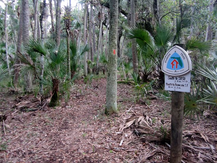 8 of the Best Section Hikes on the Florida Trail   RootsRated