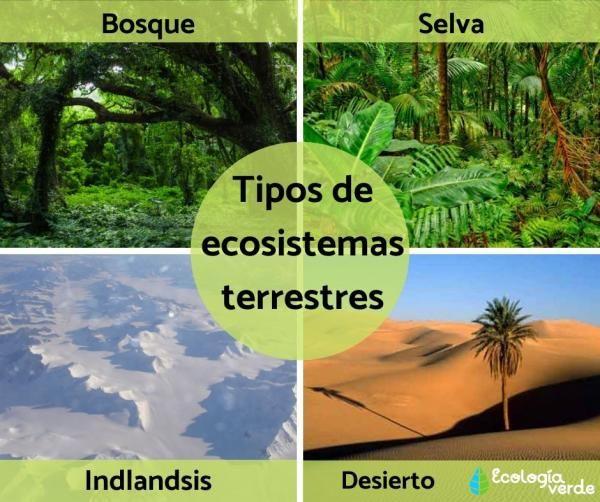 Tipos De Ecosistemas Terrestres Ejemplos Y Características Resumen Tipos De Ecosistemas Ecosistemas El Ecosistema Terrestre
